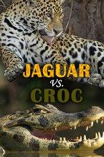 Jaguar vs. Croc