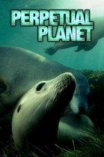 Perpetual Planet