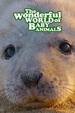 The Wonderful World of Baby Animals