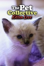 The Pet Collective: Kitten Love