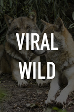 Viral Wild