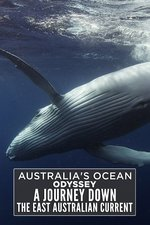Australia's Ocean Odyssey: A Journey Down the East Australian Current