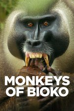 Monkeys of Bioko