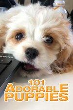 101 Adorable Puppies