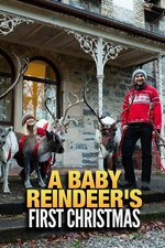 A Baby Reindeer's First Christmas