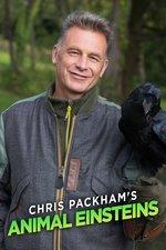 Chris Packham's Animal Einsteins