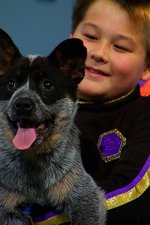 The Wonder Gang And The Blue Heeler Question