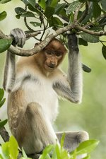 Borneo: Sacred Forest