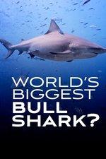 World's Biggest Bull Shark: Thousand Pound Queen