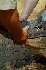 Larry Gits a Gator